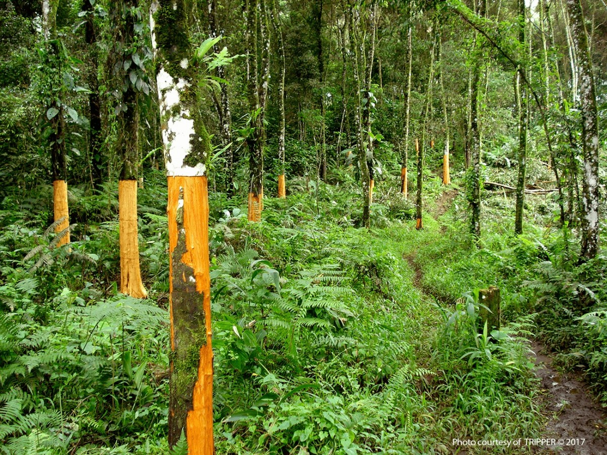 Cassia Plantation Herbie S Spices